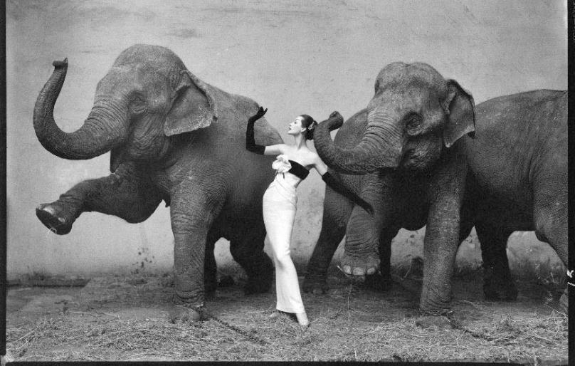 avedon-elephant-picture